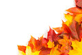 Beautiful autumn maple leaves with copy space for your text Stock Image