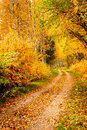 Beautiful autumn scene colorful leaves Stock Photography