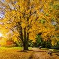 Beautiful autumn scene in park at sunrise, Salzburg, Austria
