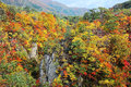 Beautiful autumn scenery of Naruko Gorge Valley with colorful foliage Royalty Free Stock Photo