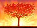 Beautiful autumn sunset tree Royalty Free Stock Photo