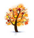 Beautiful autumn tree Stock Photography