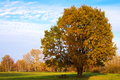 Beautiful Autumn Tree Royalty Free Stock Image