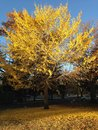 Beautiful Autumn Tree with falling leaves
