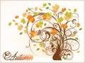 Beautiful Autumn Tree Royalty Free Stock Photo