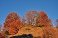 Beautiful autumn trees on the hill Stock Photo