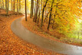 Beautiful autumn trees and road Stock Photos