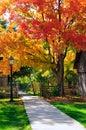 Beautiful Autumn Trees And Woo...