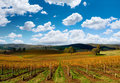 Beautiful Autumn Vineyard Stock Photo