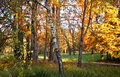 Beautiful autumnal meadow in forest at daylight. Bright colored fall day in the woods. Forest landscape at the end of autumn