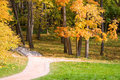 Beautiful avenue in autumn park. Royalty Free Stock Images