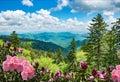 Beautiful azaleas blooming in North Carolina mountains. Royalty Free Stock Photo