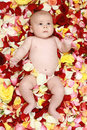 Beautiful baby boy in a rose plants Stock Photos
