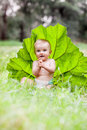 Beautiful baby boy sitting among green grass on Royalty Free Stock Photo