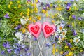 Beautiful background of flowers field of daisies and bells and two hearts made of caramel and marzipan on Valentine`s day. Copy t Royalty Free Stock Photo