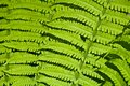 Beautiful background of green fern leaves Royalty Free Stock Photography