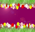 Beautiful background of red, yellow, pink and white tulips Royalty Free Stock Photo