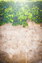 Beautiful background walls and plants with stone Royalty Free Stock Image