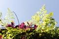 Beautiful backlit plants Royalty Free Stock Photos