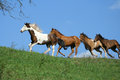 Beautiful batch of horses running on horizon in summer Stock Images