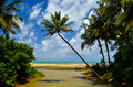 Beautiful beach with palm tree and blue sky Royalty Free Stock Photo
