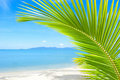 Beautiful beach with palm tree over the sand Stock Images