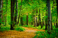 Beautiful beech forest near Rzeszow, Poland Stock Images