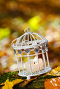 Beautiful bird cage in autumn forest garden party decoration Stock Photos