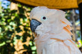 Beautiful bird cockatoo parrot tree Royalty Free Stock Photo