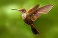 Beautiful Bird In Flight. Humm...