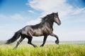 Beautiful black horse running trot Stock Photo