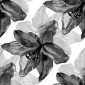 Beautiful black lilies flowers seamless pattern on white background