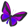 Beautiful black and purple butterfly isolated on white background Royalty Free Stock Photography