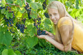 Beautiful blonde girl in fall vineyard outdoors Stock Images