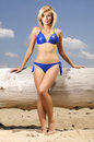 Beautiful blonde woman in blue bikini young adult attractive and sensuality posing on a log the beach Royalty Free Stock Images
