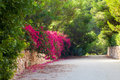 Beautiful blooming alley in spanish island mallorca spain Stock Photography