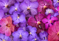 Beautiful blooming orchid group of Stock Photography