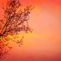 Beautiful blooming tree on red dramatic sunset background spring time season rural garden seasonal nature Stock Photography