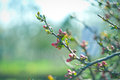 Beautiful blossoming tree spring on sky background Stock Photos