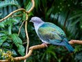 Tropical grey blue green bird on a branch Royalty Free Stock Photo