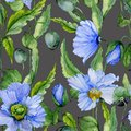 Beautiful blue poppy flowers with green leaves on dark gray background. Seamless floral pattern. Watercolor painting.