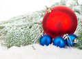 Beautiful blue and red Christmas balls on frosty fir tree. Christmas ornament.