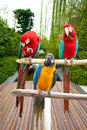 Beautiful blue and scarlet macaw perched on a wooden post by the tropical garden three Royalty Free Stock Photography