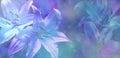 Beautiful Blue Wedding Bokeh Lillies Background Royalty Free Stock Photo