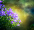 Beautiful bluebell flowers on green blurred nature background outdoor Stock Photos