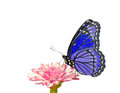 Beautiful bluish purple butterfly Stock Photos