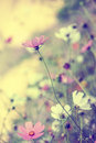 Beautiful blur background with tender flowers defocus pastel floral art design in retro style Stock Image