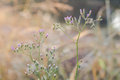 Beautiful blur Forest meadow with wild grasses light background Royalty Free Stock Photo