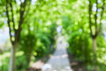 Beautiful blurred summer trees and walk in park Royalty Free Stock Photo