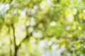 Beautiful bokeh background of defocused tree. Natural blurred backdrop of green leaves. Summer or spring season. Royalty Free Stock Photo